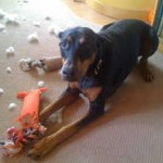 DestructoDog